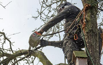 the process of removing dead wood from Chesham trees