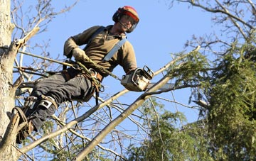 hiring experienced Chesham tree surgeons