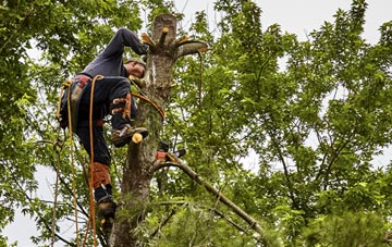tree surgeon Chesham