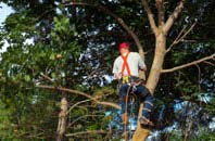 Chesham tree crown reduction services